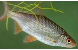 Перенесены сроки весенних запретов на лов рыбы